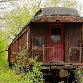 abandoned train by Jay Anderson - Transportation Trains ( passenger, old, train car, rail road, rail, train, abandon, woods, , Spring, springtime, outdoors )