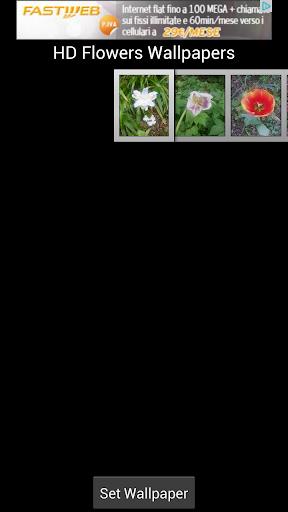 HD Flowers Wallpaper