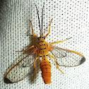 Wasp Mimicking Moth