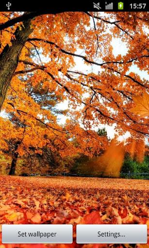 秋季HD PRO