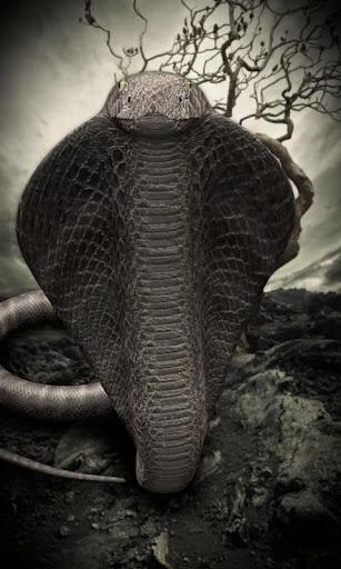 玩免費個人化APP|下載コブラ lwp 〜 ヘビのコブラ ライブ壁紙の女王を満たす app不用錢|硬是要APP