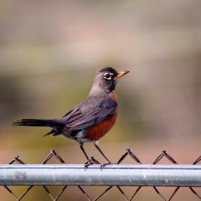 by Valerie Aebischer - Animals Birds (  )