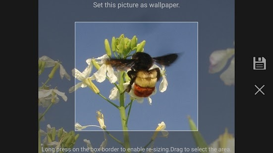 Pollinators- screenshot thumbnail