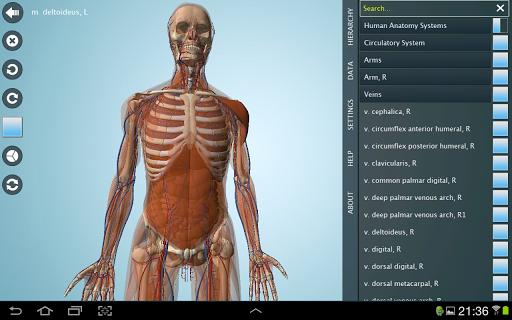 【免費醫療App】Female Anatomy 3D - Anatronica-APP點子