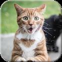 Cat licks glass Video LWP icon