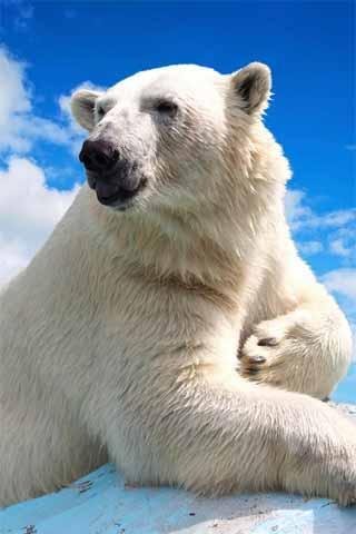 How To Draw Polar Bear