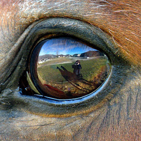 In my horse's eye by Ana France - Animals Horses