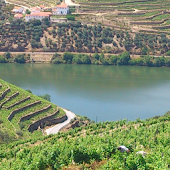 Douro and Port wine