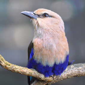 Birds of a Feather by Jamie Tambor - Animals Birds ( bird, animals, africa, birds, photography )