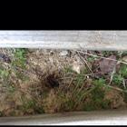 Mouse hole