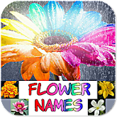 Learning Flower Names - Kids