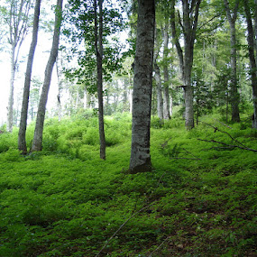 Green by Iuliu-Cristinel Pop - Nature Up Close Trees & Bushes