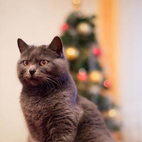 by Metka Majcen - Animals - Cats Portraits (  )