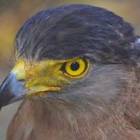 """""""There's only one way to become an eagle, and that's to be born an eagle.""""  by Chobi Wala - Animals Birds ( , purple, yellow, color )"""
