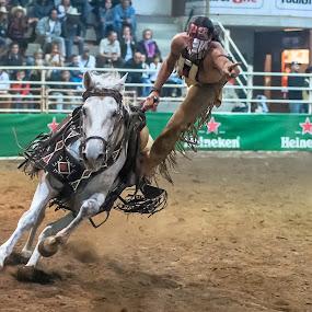 Indian Stunt by Massimo Mazzasogni - Sports & Fitness Rodeo/Bull Riding ( horse, massimo mazzasogni, indian, stunt, acrobatic )