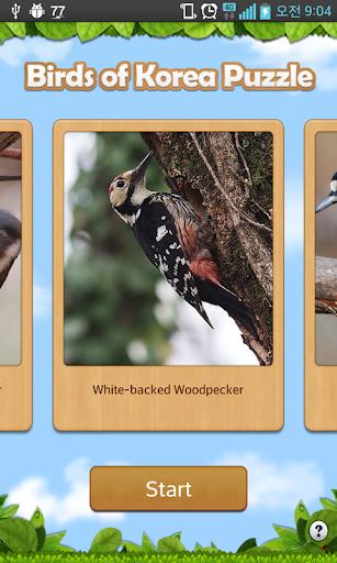 Birds of Korea Game