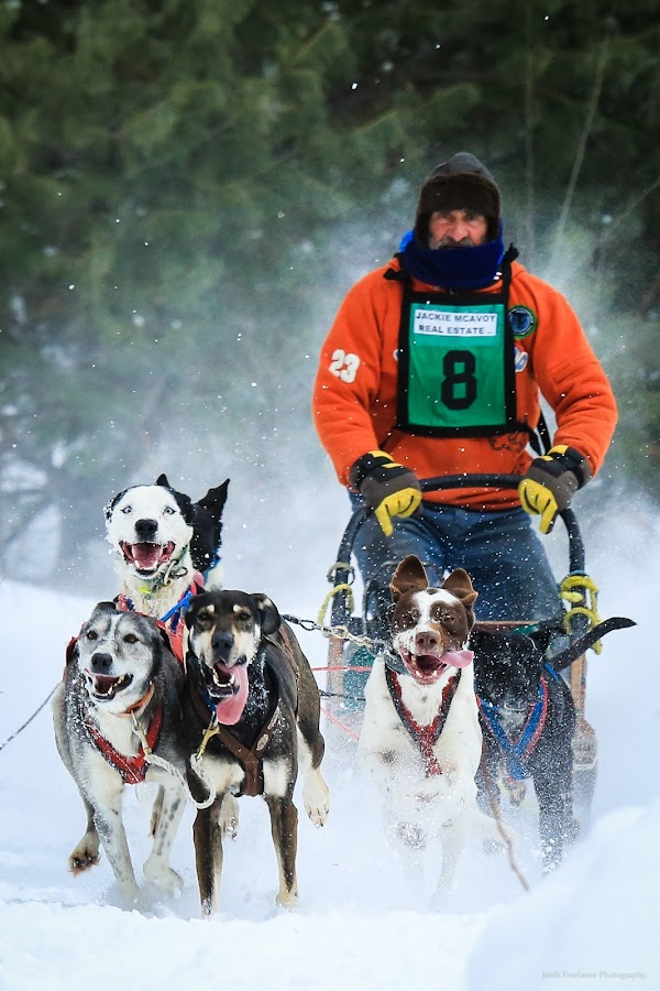 Eat My Snow Dust! by Roberta Janik - Sports & Fitness Snow Sports ( sled dogs, dogs, snow sports, dog sleding, mushers, male musher, dog sled racing )