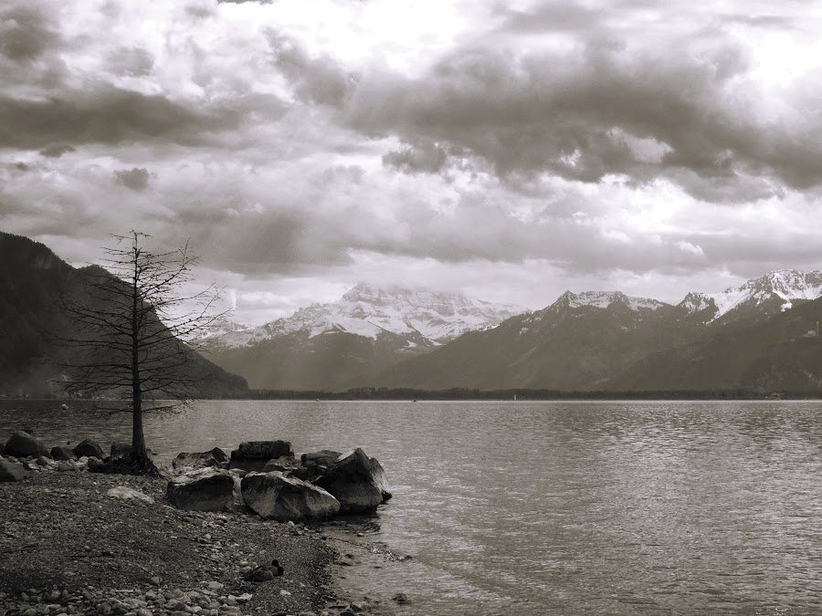 Geneva lake by Bogdan Penkovsky - Black & White Landscapes ( nature, bw, switzerland, lake, spring )