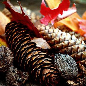 pineconesleaves 7.jpg