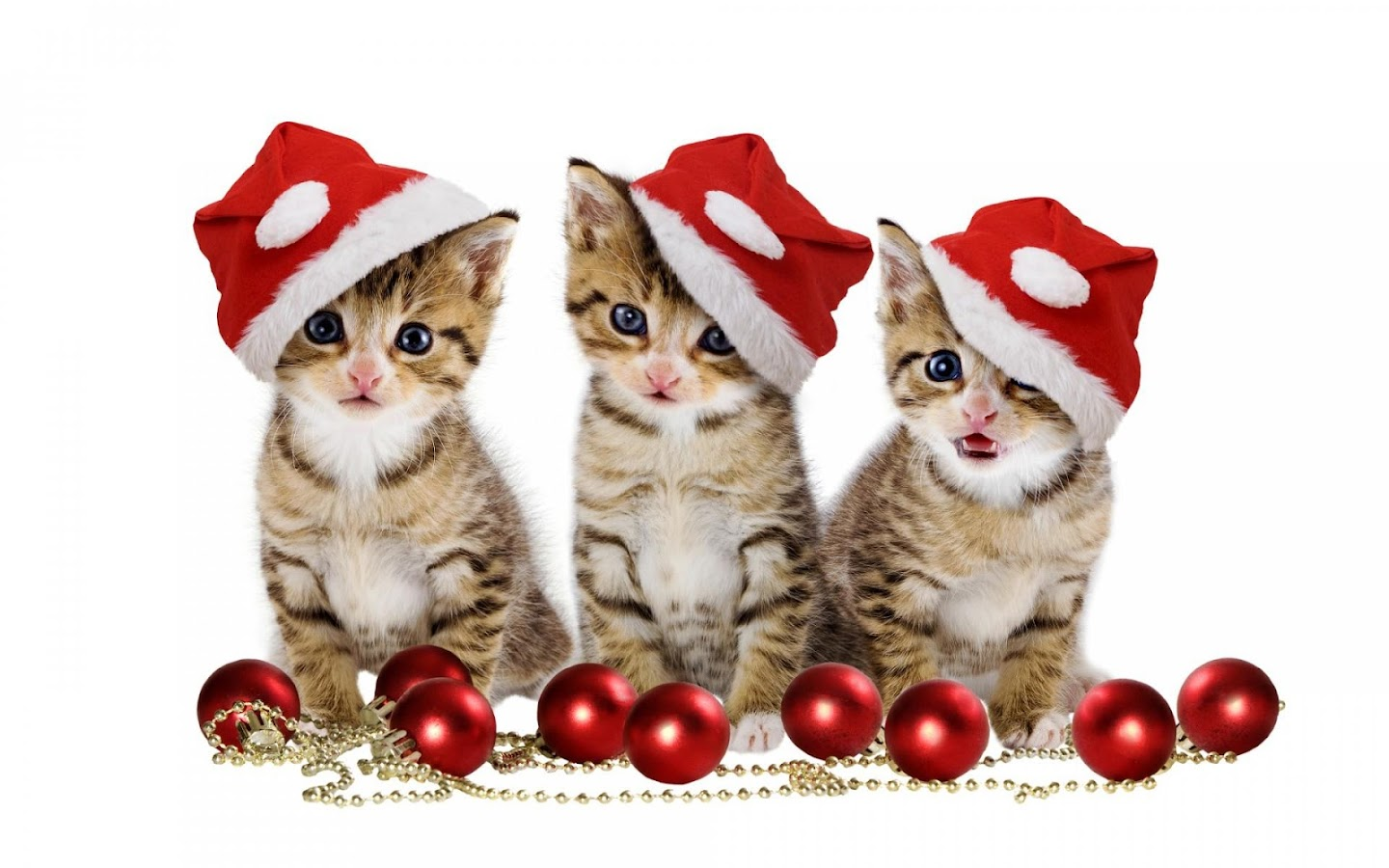 pet christmas wallpaper hd - android apps on google play