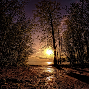 by Otto Mercik - Landscapes Forests ( , Lighting, moods, mood lighting )