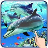 Beautiful Dolphin Magic Touch