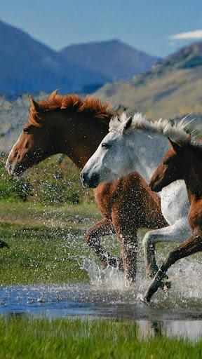 馬は壁紙を生きる