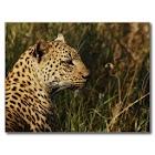 Leopard HD Wallpaper icon