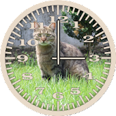 Cat 5 Tabby Grass Analog Clock