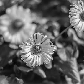 by Rui Quinta - Black & White Flowers & Plants