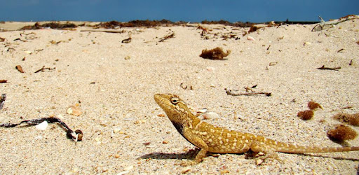 Mobile Field Guide to Russian Reptiles - specify them in Nature!