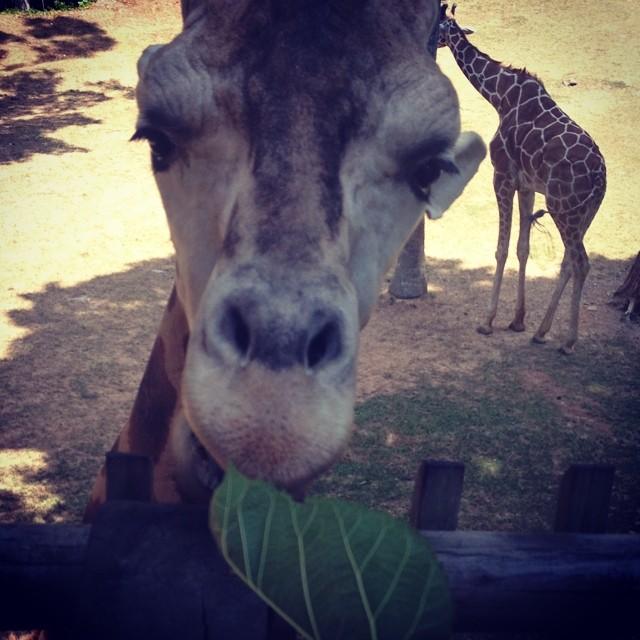 feeding jeffrey! by Victoria Loos - Animals Other Mammals