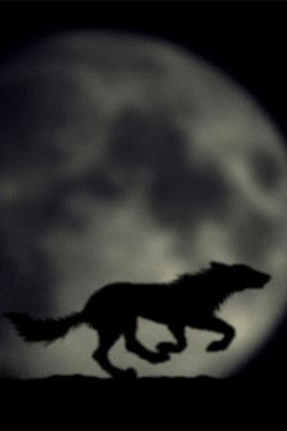 Steppen狼 - 動態壁紙