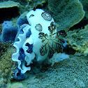 Polka-dot nudibranch & egg ribbon