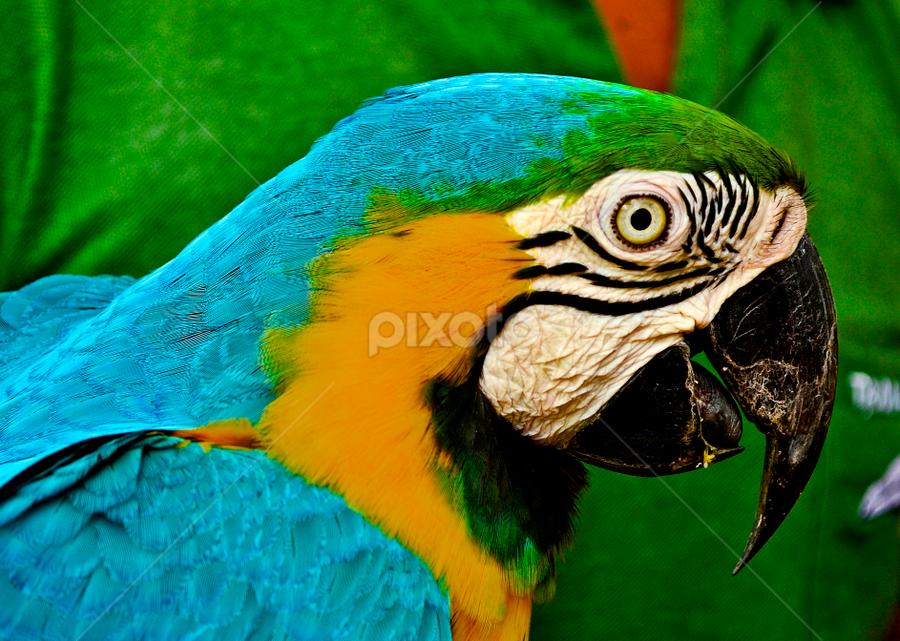 by Richard Idea - Animals Birds