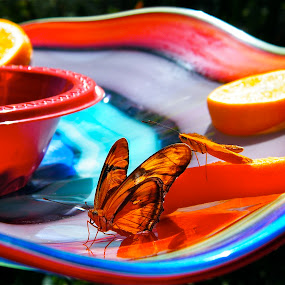 Butterfly on blown glass dish by Donna Probasco - Novices Only Objects & Still Life (  )