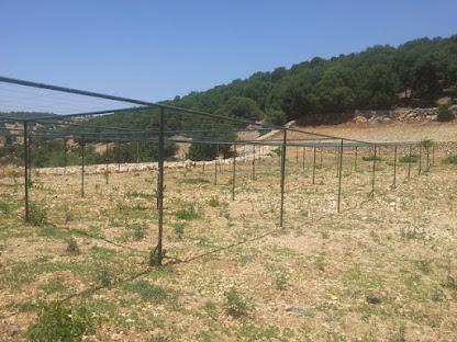 Souq Al Shams - Farmers Market - RSCN Organic Farming Project