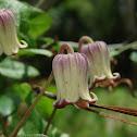 Net-leaf Leather Flower
