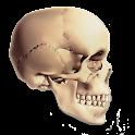 Human Anatomy MCQs