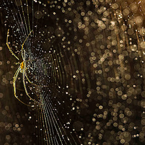 Spider Inside by Fadel Satriawan - Animals Insects & Spiders ( macro )