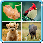 4 Pic Animal Puzzle Kids Free