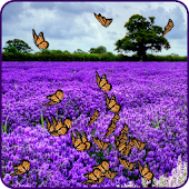 Lavender Live Wallpaper