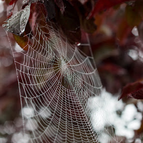 by Rick Shick - Nature Up Close Webs
