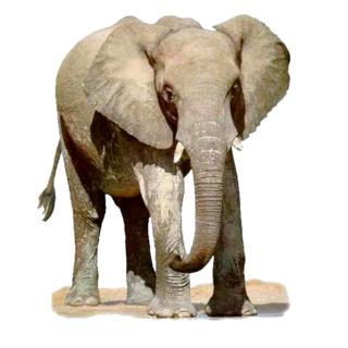 【免費娛樂App】Widgets store: Elephant-APP點子