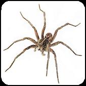 Spider Live Wallpaper