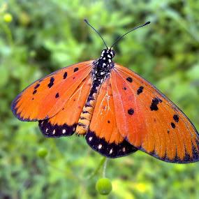 Butterfly by Zen Syarif Abidin - Instagram & Mobile Other
