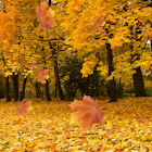 Autumn 3D Leaf Live Wallpaper icon