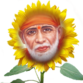 SAIBABA in Sunflower Garden