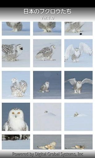 Owls of Japan