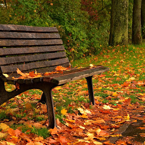 time out by Abhinav Ganorkar - City,  Street & Park  City Parks ( benches, fall colors, park, autumn, nikon d, public, bench, furniture, object, , relax, tranquil, relaxing, tranquility )